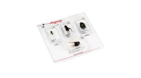 купите Набор насекомых в акриле Микромед №2 в Москве